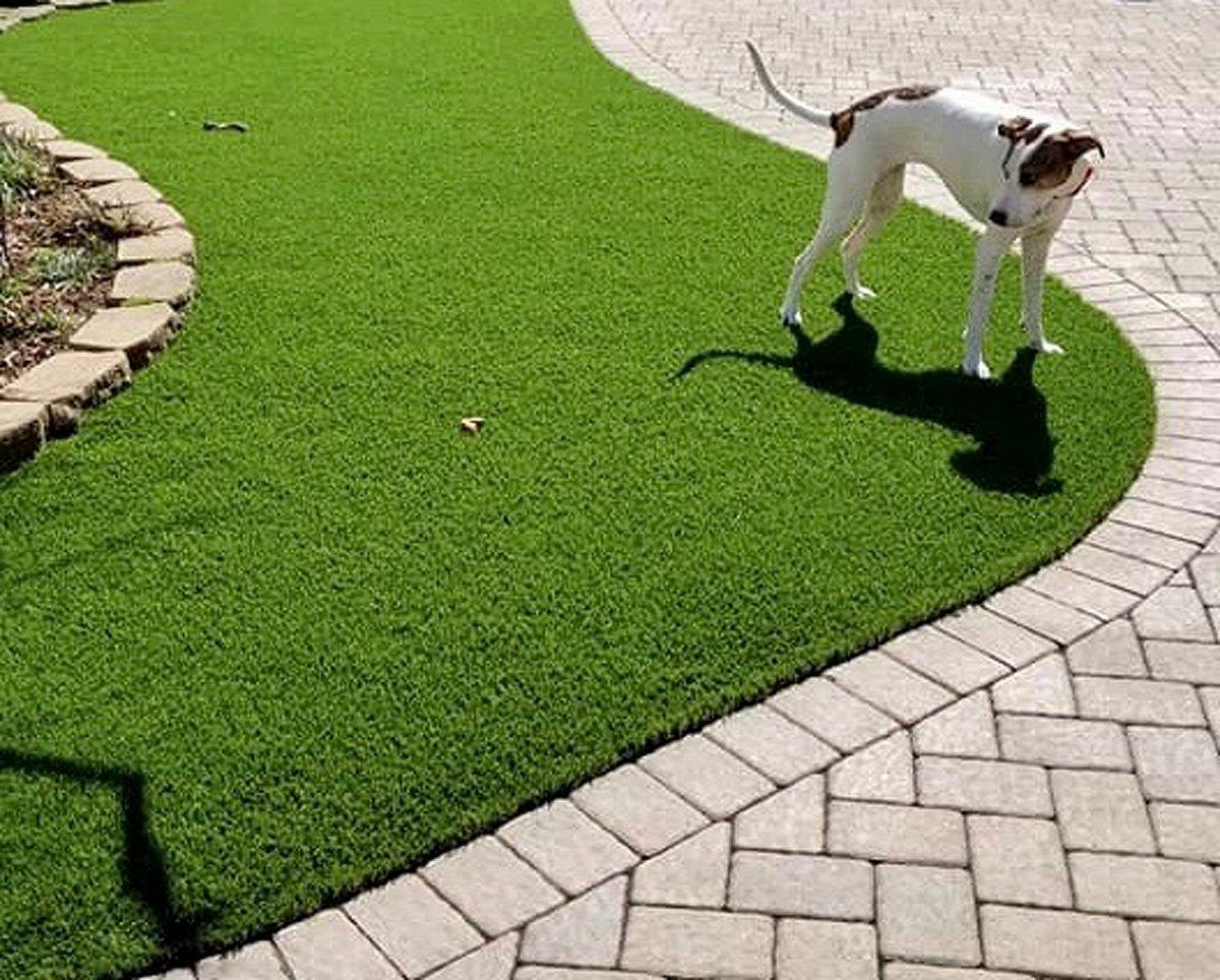 pet turf-pet grass-pet-grass-lawn-artificial-turf-chicago-turf company-fake grass-dog-pet run-dog run-3
