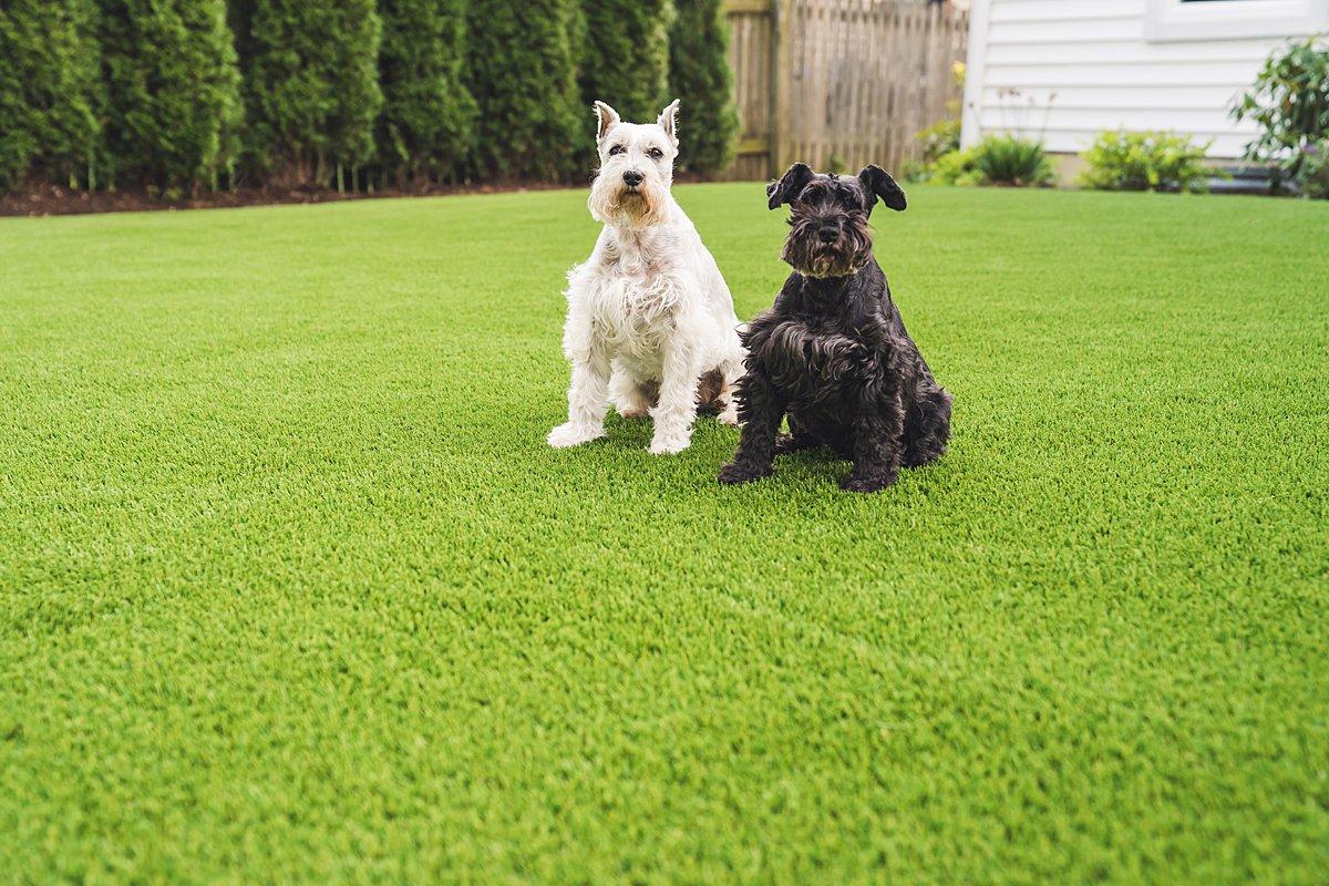 pet turf-pet grass-pet-grass-lawn-artificial-turf-chicago-turf company-fake grass-dog-pet run-dog run-4