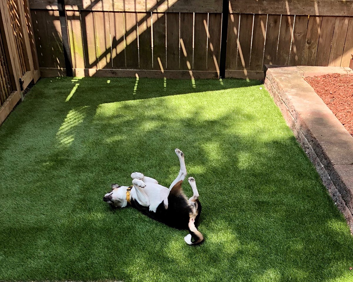 pet turf-pet grass-pet-grass-lawn-artificial-turf-chicago-turf company-fake grass-dog-pet run-dog run-5