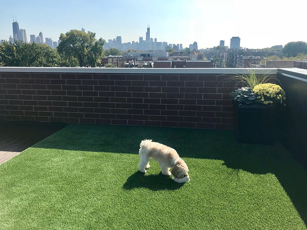 GroTurf-DuPage-Cook-Chicago-Rooftop-Lawn-Artificial-Grass_0017